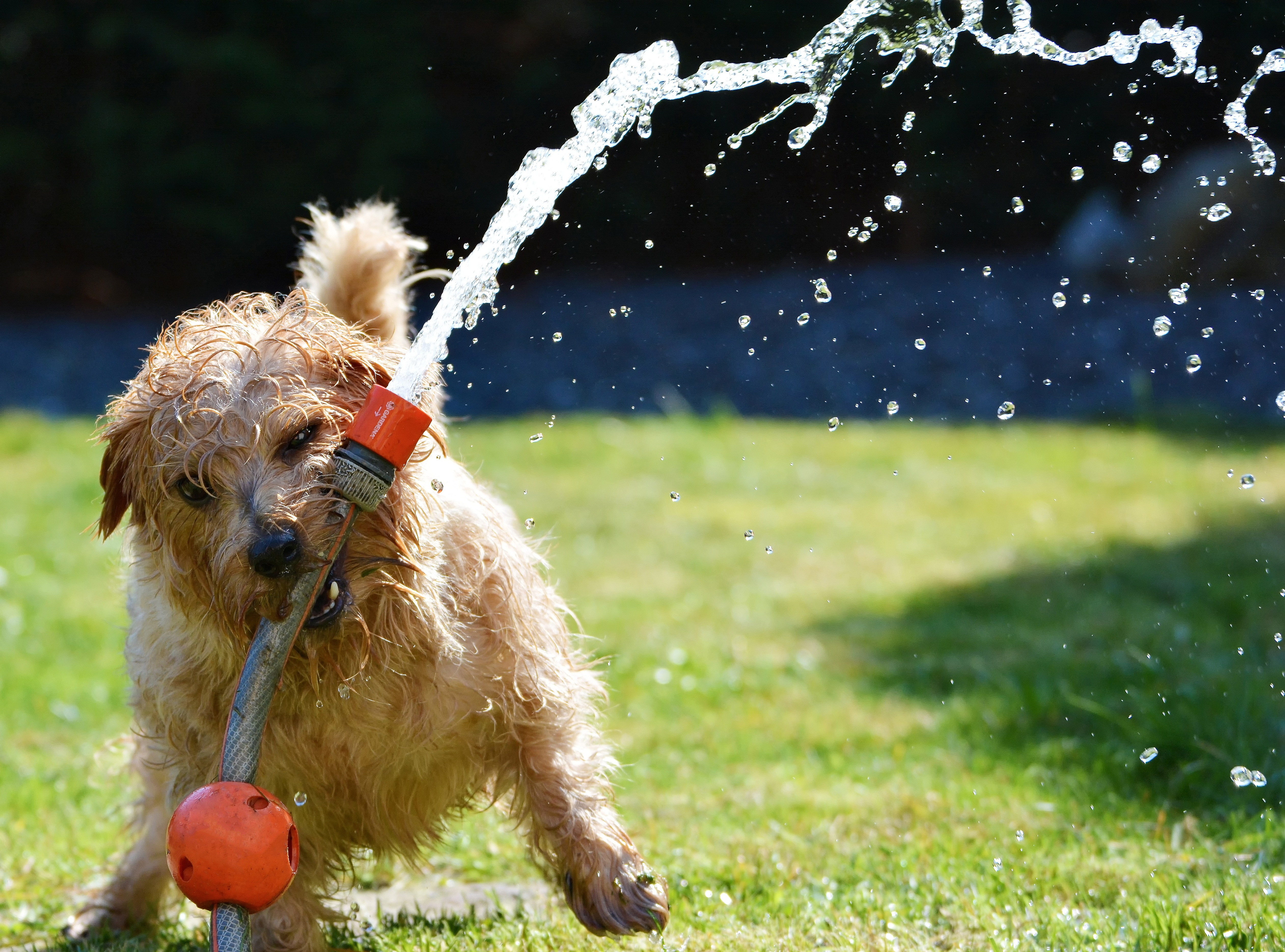 Canva - Puppy Playing with Garden Hose (1)