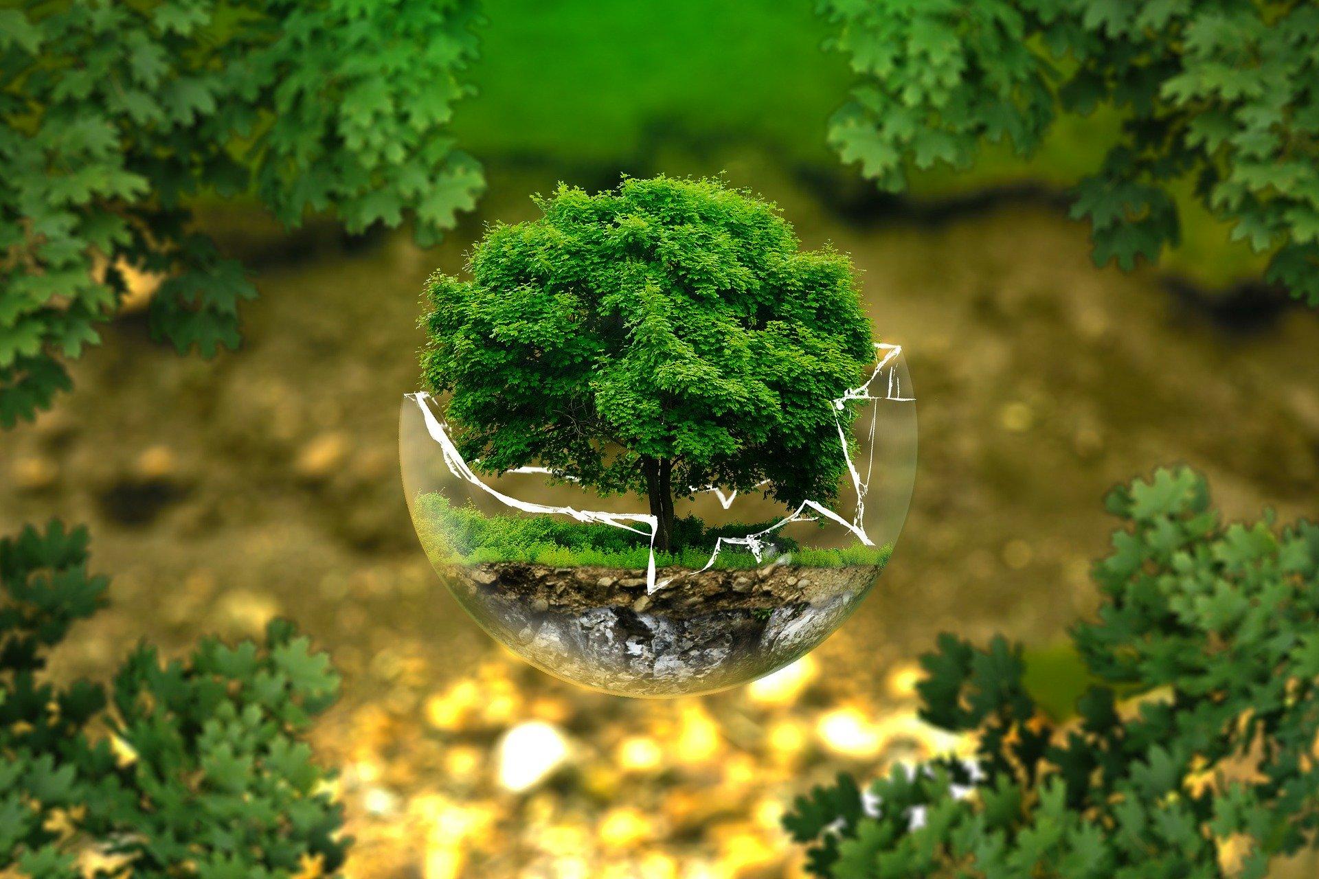 environmental-protection-326923_1920